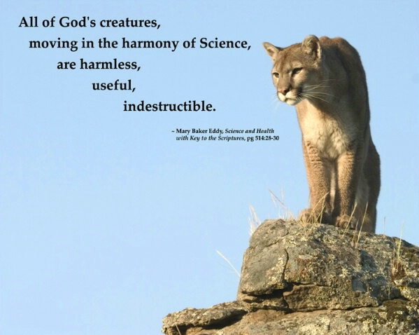 All God's Creatures - ID: 654128 © Jim Miotke