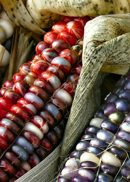 Red corn, blue corn