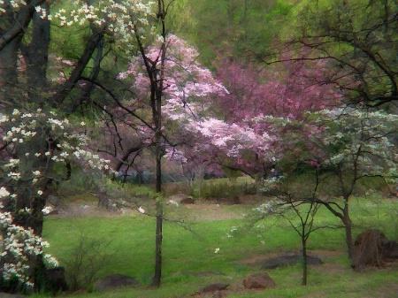 Spring Renews The Soul