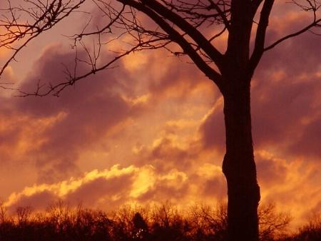 The Sky's On  Fire*