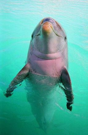 Fatboy in the Bahamas - ID: 714467 © Mary B. McGrath