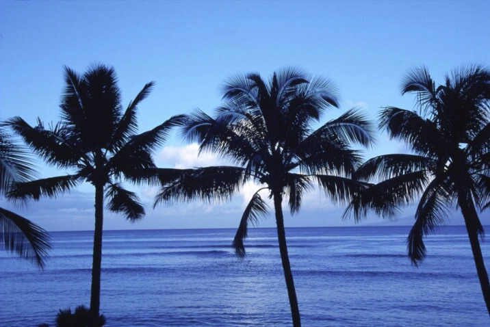 Three Palms at Kahana at Dawn - ID: 718325 © Lamont G. Weide