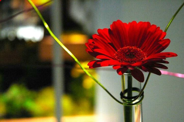Philadelphia Flower Show 2005 by DMP
