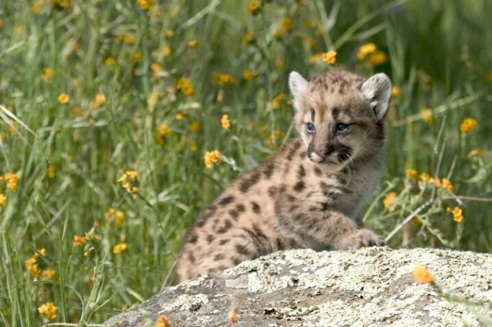 Kitten On Rock Looking Back - ID: 536979 © Jim Miotke