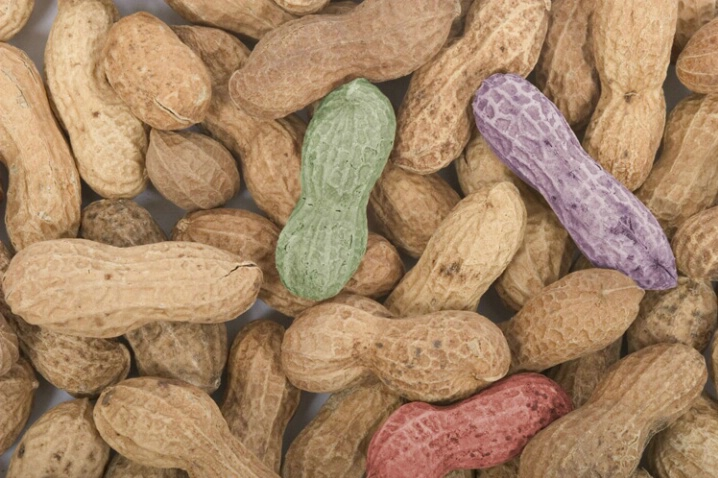 Peanuts Colorized - ID: 538264 © Jim Miotke