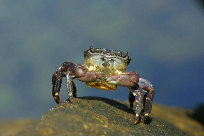 Crab - ID: 538280 © Jim Miotke