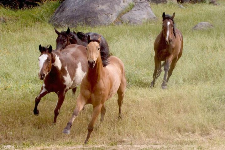 Wild horses Corrected - ID: 538324 © Jim Miotke