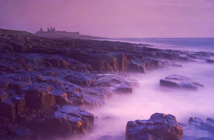 Purple Dunstanburgh Mist - ID: 538329 © Jim Miotke