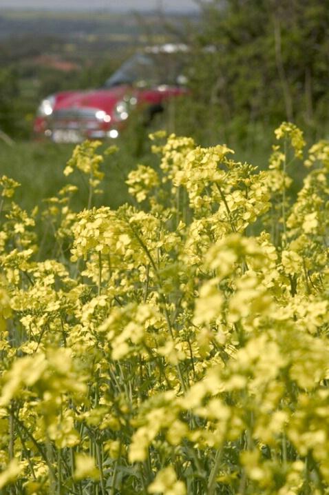 Mini In Yellow Field Car Blurry