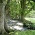 2Framing Tree - ID: 538569 © Jim Miotke