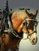 Maximum Horsepowe...