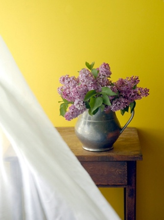 lilacs by the window