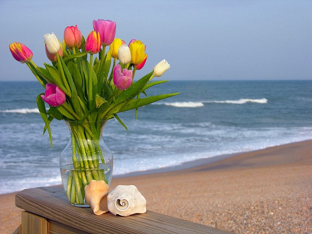 Tulips and Shells
