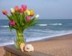 Tulips and Shells