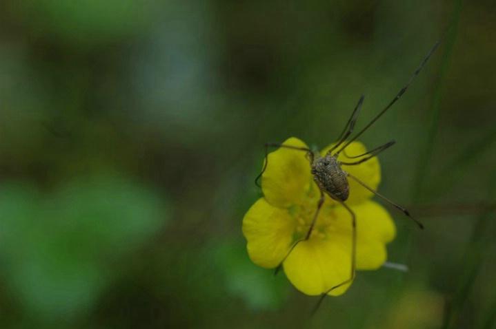 Spider perch - ID: 964439 © Frieda Weise