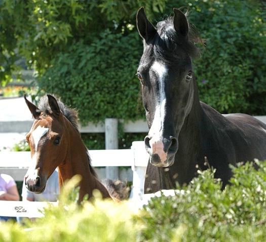 Arabian Mare & Foal - ID: 1141671 © Zita A. Strother