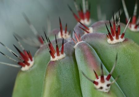 cactus colors