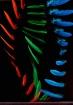 RGB feathers