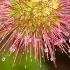 2Bidbidi Plant - ID: 1580437 © Jim Miotke