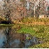 2Swamp Junk - ID: 1769542 © Kathleen K. Parker