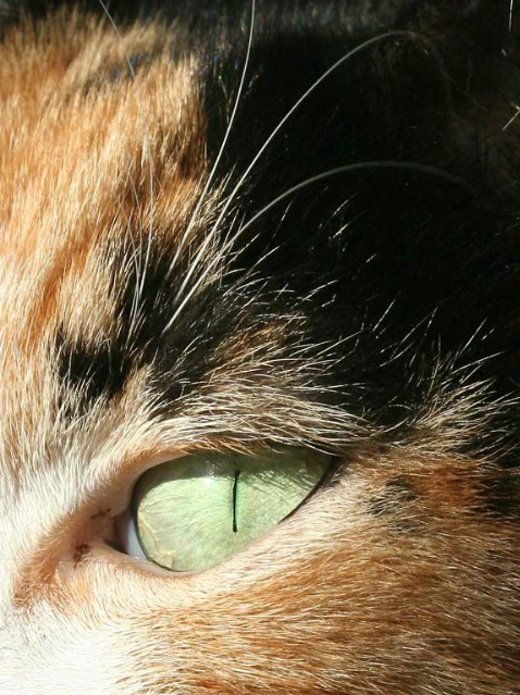 Cat - ID: 1848992 © Mary B. McGrath