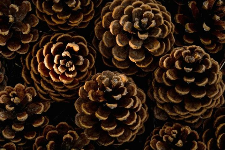 Pine Cone Patterns - ID: 1917320 © Jim Miotke