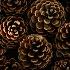 2Pine Cone Patterns - ID: 1917320 © Jim Miotke