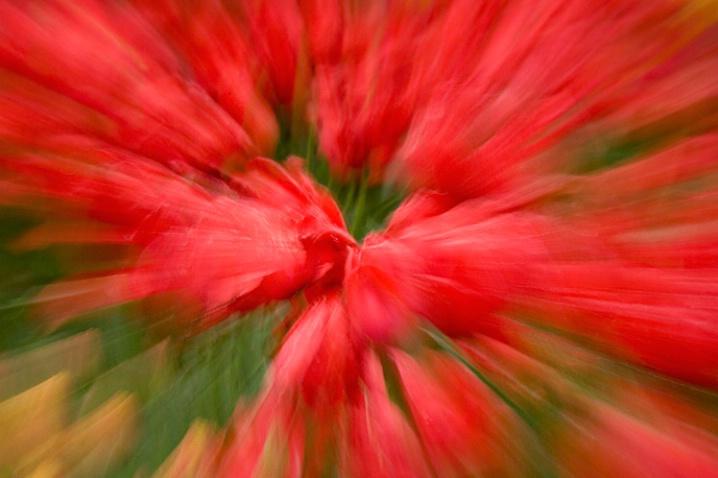 Red Explosion - ID: 1987671 © Jim Miotke