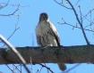 Falcon Perch