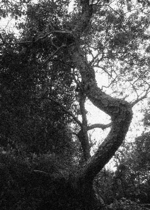 Harp Tree