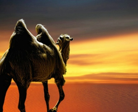 Arab Sundown
