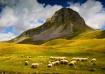 High pastures