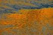 Winooski River #1...