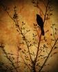 Nevermore (Portra...