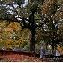 2Roswell Cemetery - ID: 2937041 © Kathleen K. Parker
