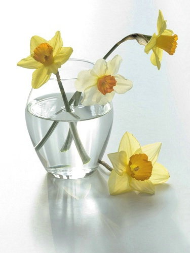 Backlight Flowers