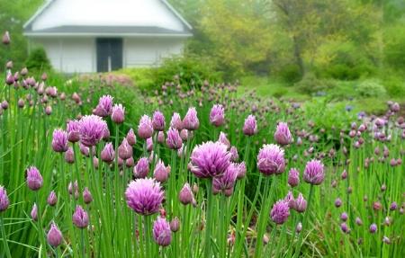 The Garden Club*