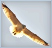Gull Of My Dreams...