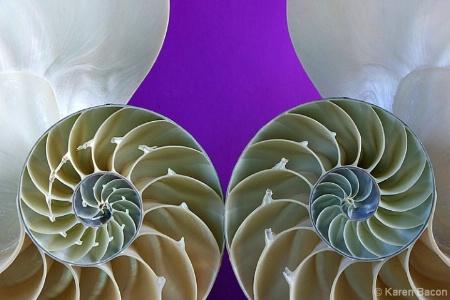 nautilus by design 2