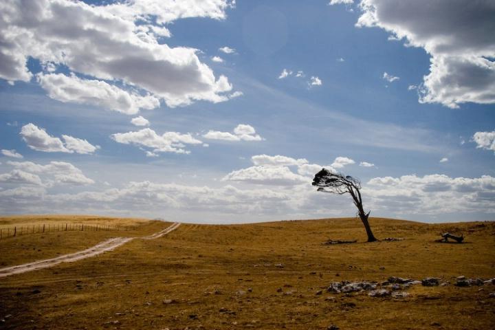 Windswept 2