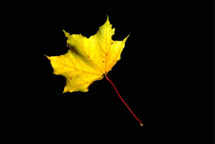dead leaf society no.4(last glow)