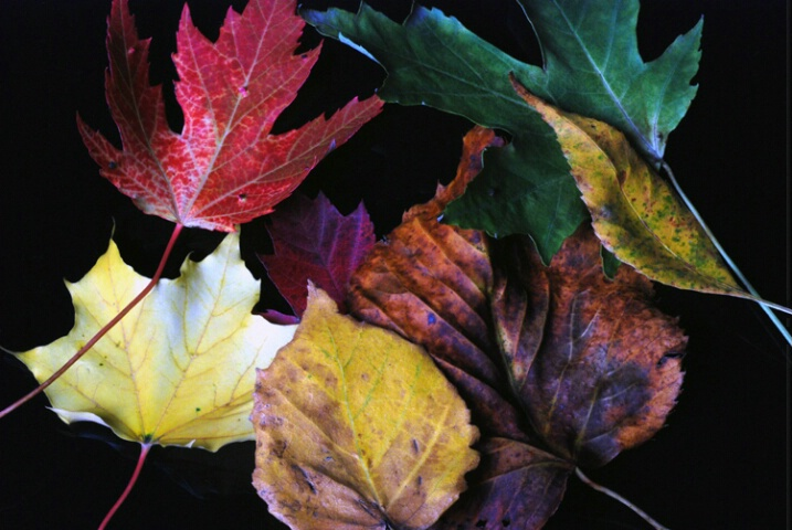 dead leaf society no.7(Fall 2007)