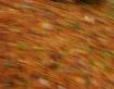 leaves a blur