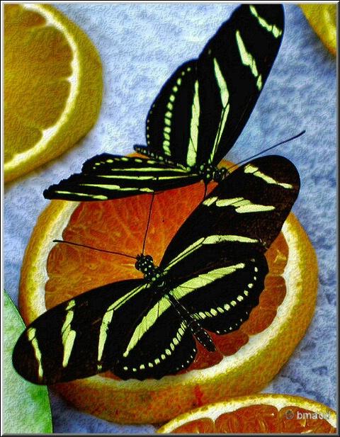 Dining Butterflies