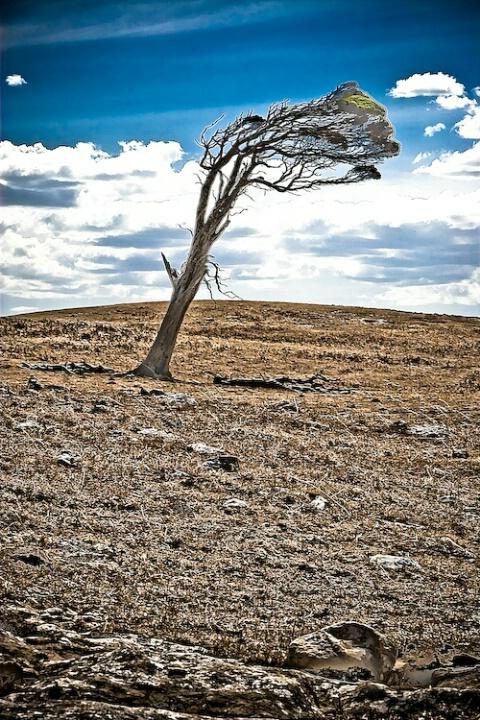 Mt Gambier scene, Sth Australia