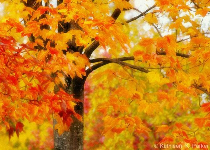 Windy Autumn Leaves - ID: 5131633 © Kathleen K. Parker