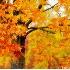 2Windy Autumn Leaves - ID: 5131633 © Kathleen K. Parker