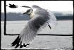 Hang Gliding in 2...