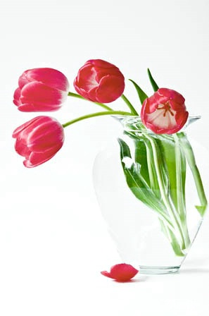 Tulips In Natural Light