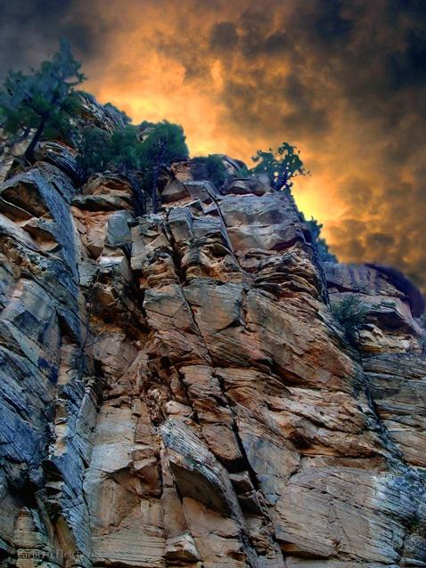 Looking Up - ID: 6405929 © Carolyn  M. Fletcher